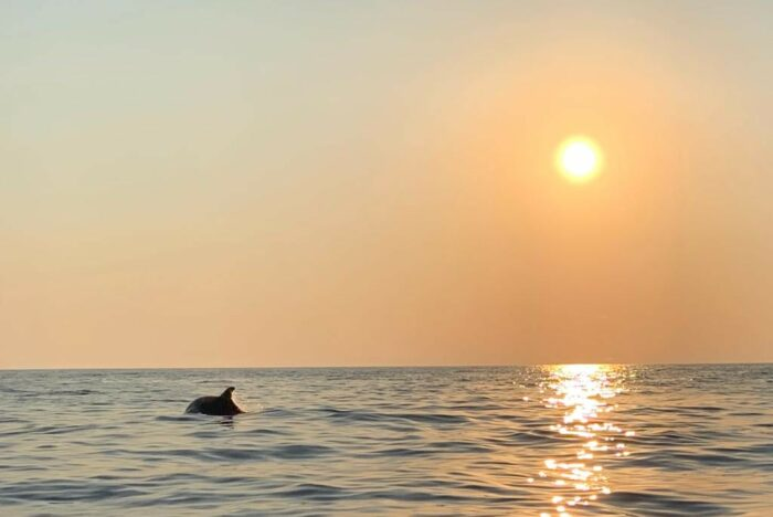 Dolfijnen spotten bij de ondergaande zon