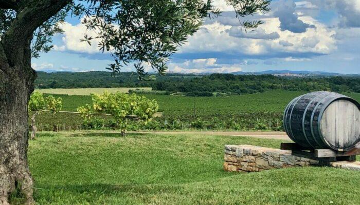 Vakantie accommodatie tussen olijf- en wijngaarden in Istrië Kroatië