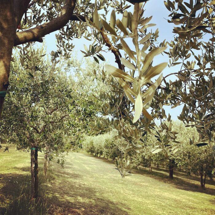 Agriturismo in Istrië